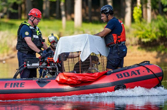Clay Fire Territory uses a boat to help transport a stray dog from a steep riverbank on St. Joseph River on Thursday in South Bend.