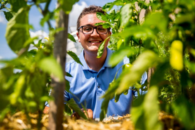 Nathan Steimel, a student at Valley High School, poses for a photo among the peppers growing in the school garden plot maintained by Valley's greenhouse club, on Wednesday, Aug. 4, 2021, in West Des Moines. Over the last two years, Steimel restored the school's greenhouse and brought back the club.