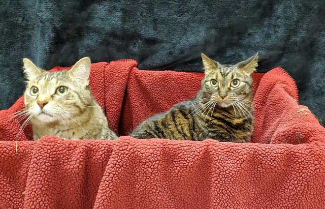 Pixie and Trixie are looking for a home and waiting at the Humane Society of Sandusky County.