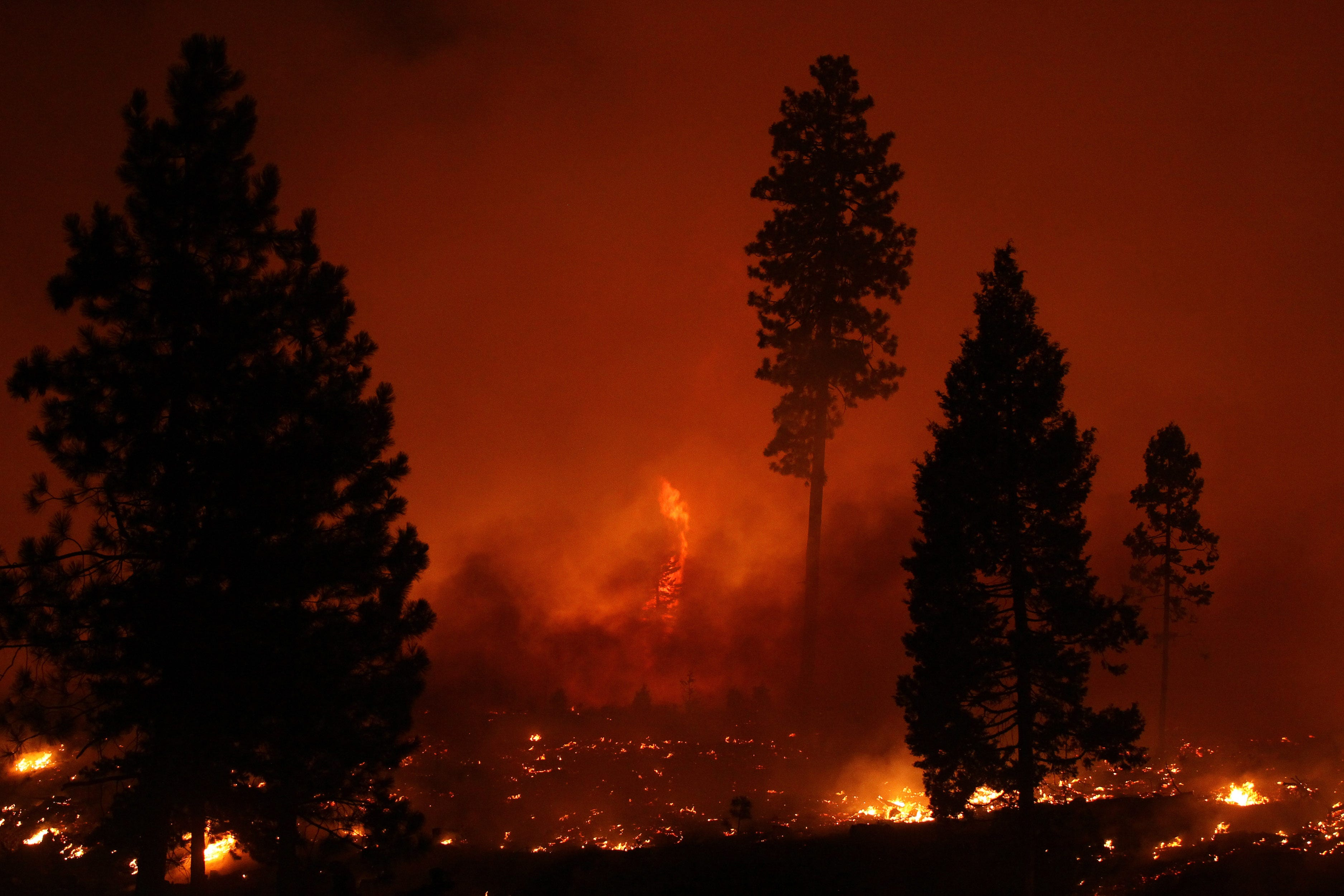 US Forest Service is closing California s national forests as wildfires spread