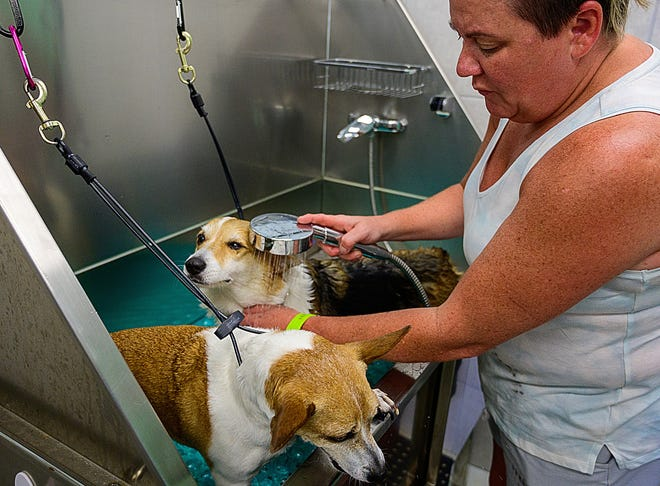 Kerri Lee give her dogs, Lucy and Jersey, a bath at the Soggy Doggy self-serve pet wash in Crescent Beach on Friday, before returning home to Alabama. The Lee family stayed at Crescent Beach because they consider it very dog friendly.