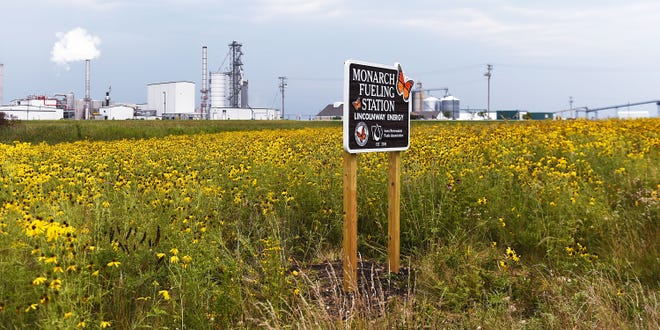 Wildflowers bloom at the two-acre Monarch Fueling Station Thursday, Aug. 5, 2021, in front of Lincolnway Energy in Nevada, Iowa. In 2017, the U.S. Fish and Wildlife Service laid down a seed mixture with an emphasis on milkweed plants, where monarchs can lay their eggs. The program helps Iowa's ethanol and biodiesel plants establish patches of monarch habitat on ethanol and biofuels plant grounds.