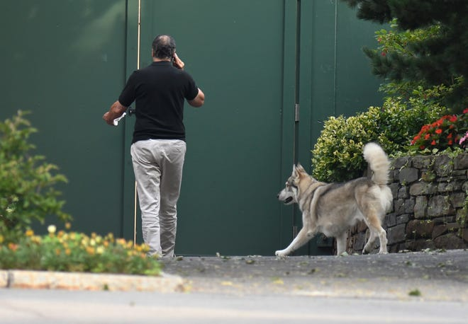 New York Gov. Andrew Cuomo on the phone while walking with his dog, Captain, at the Executive Mansion in Albany on Aug. 7, 2021.