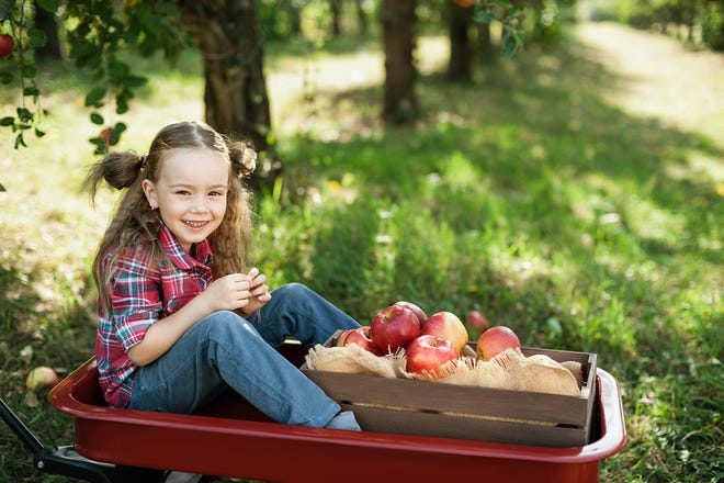 Take a bite out of apple season at one of these pick-your-own orchards.