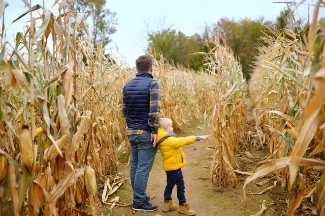 Make your way through one of these awesome mazes this fall.