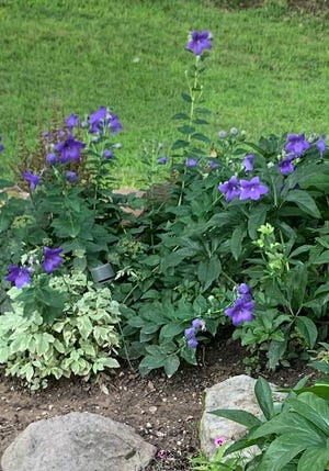 Their yard and filled with all kinds of perennial plants and flowers.