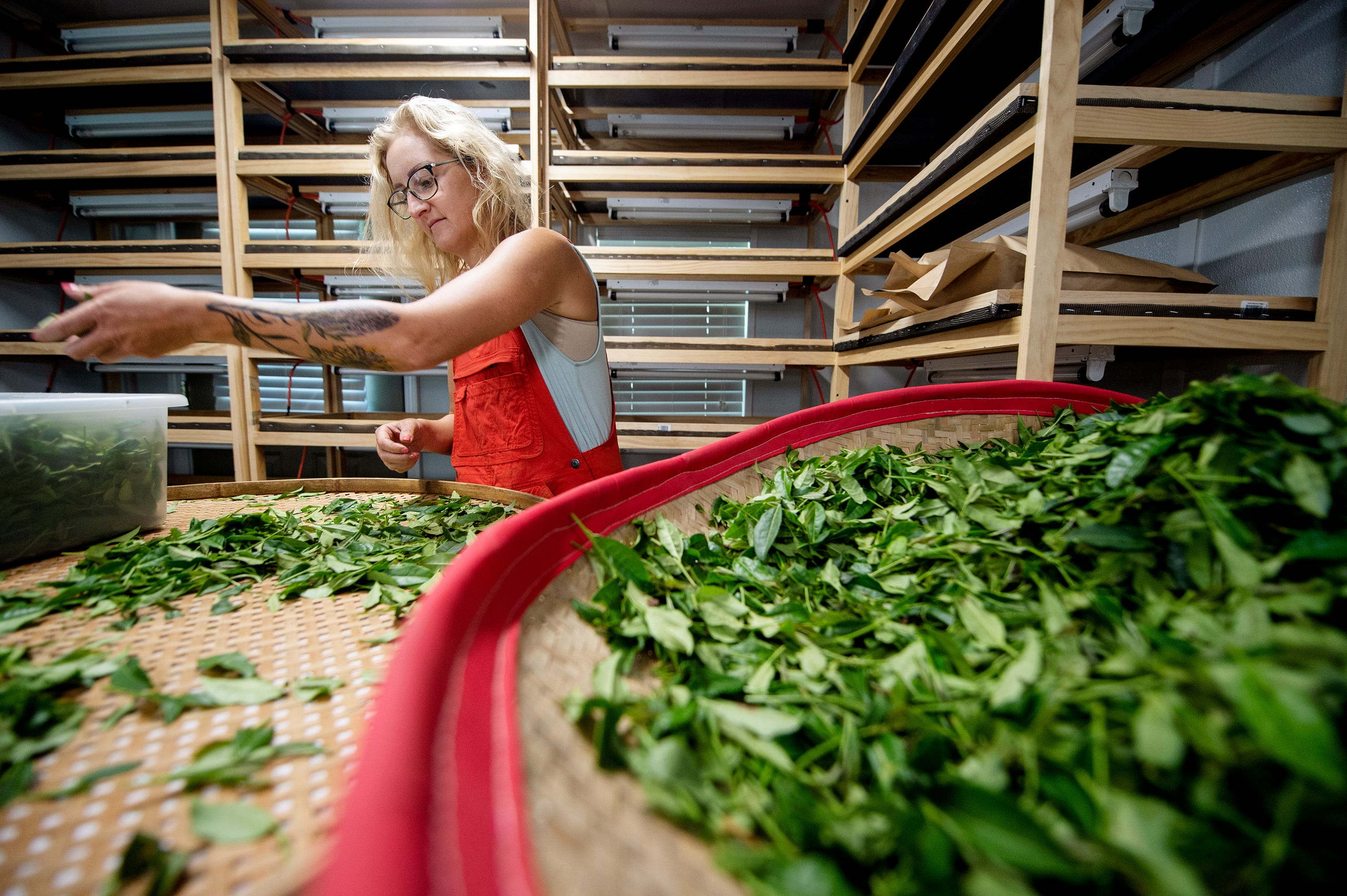 Sagan King, an employee of The Great Mississippi Tea Company, sorts through green tea in a production room at the company's farm in Brookhaven, Miss., Thursday, July 29, 2021.
