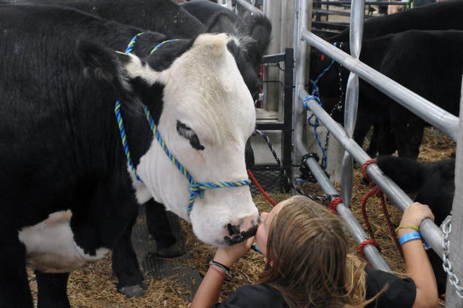 Alli Milnor gives Cupid the steer a kiss.