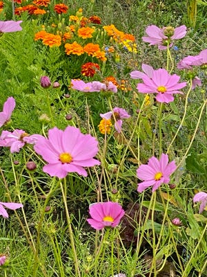 Flowers are still in bloom all around this summer.