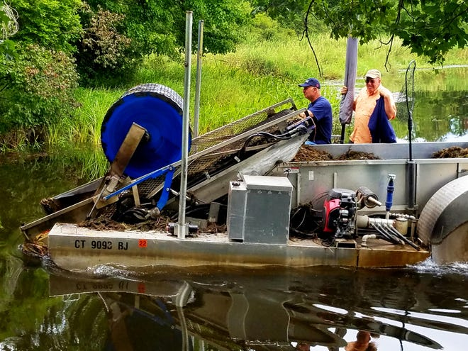 An EcoHarvester and crew work last week to clear invasive weed species from the river bed of the Nemasker River in Middleboro.