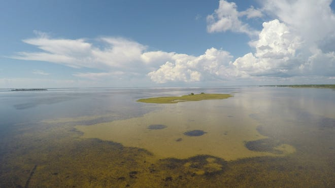 St. Joseph Bay has the richest and most abundant concentrations of marine grasses along the Northwest Florida coast.