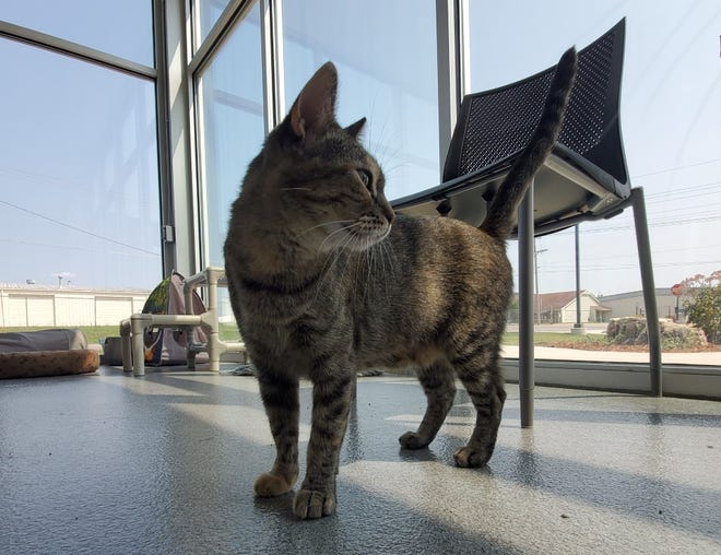 Fiona is the Wellington Humane Society Pet of the Week