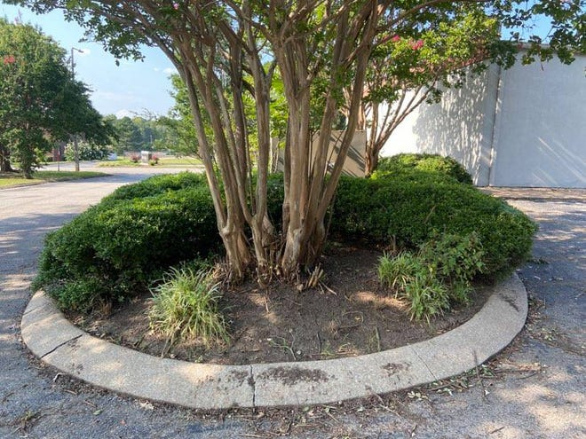 This space was largely overgrown and was recently cleaned out by a group from Soulquest Church.