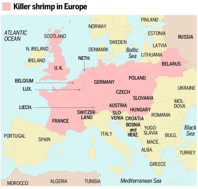 Killer shrimp in Europe