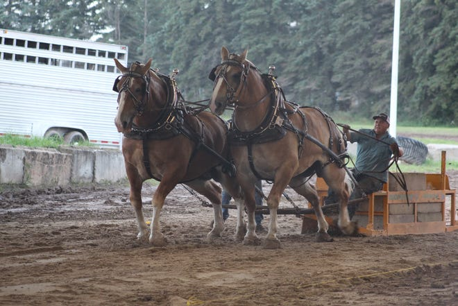 Tuesday night at the Cheboygan County Fair saw the grandstand event of the heavyweight horse pulls. Each of the seven teams started out pulling their combined weight of 5,000 pounds, pulling the heavy load at least 27 and one-half feet.