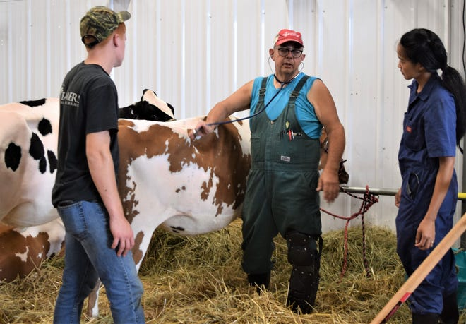Holmes County Fair veterinarian Dr. Eric Shaver checks the heart rate of Wyatt Schlauch's (left) cow. Shaver's summer intern Phusita Davidovich looks on.