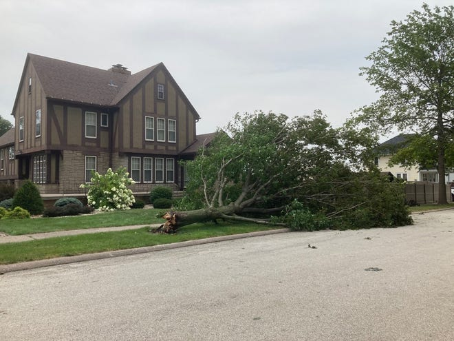 A downed tree is in the yard at the home on the east side of College Ave. at 2nd St. in Geneseo.