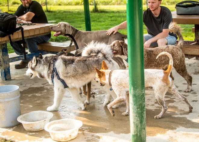 Clarke Delisle pets Abe, owned by Sadie Glass, as the group of dogs grabs some shade for a minute Wednesday at Ferguson Dog Park.