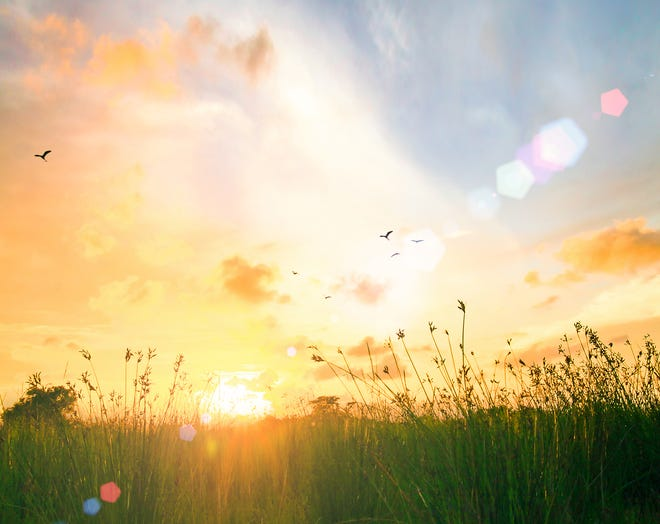A country meadow sunrise