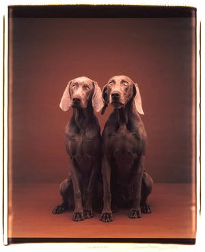 William Wegman (American, born 1943), Audience, 1990, Polaroid Polacolor ER print on paper, Montgomery Museum of Fine Arts, Montgomery, Alabama, Association Purchase, 1996.2; Selected by Sarah Walker Thornton, Artistic Director, Cloverdale Playhouse