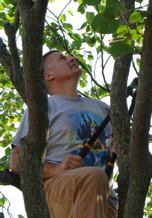 SERVE volunteer Doug Hamman climbs a tree to trim away the dead branches.