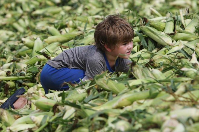 Volunteers shuck about 16 tons of sweet corn Wednesday while taking part in Shuckfest 2021 at the Merschman Seeds facility in West Point.