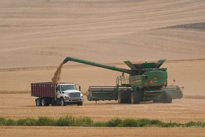 """A combine transfers wheat into a grain truck, Thursday, Aug. 5, 2021, near Pullman, Wash. Across eastern Washington, a drought the National Weather Service classified as """"exceptional"""" has devastated what is normally the fourth largest wheat crop in the nation."""
