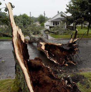 A large tree uprooted and broke loose, then fell across Michigan Ave. in Monroe during a thunderstorm Wednesday late afternoon. Thousands remain without power today.