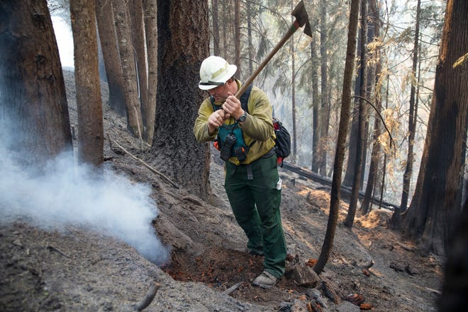 Fighter Tony Davis digs out the burning roots of a tree along a fire line on the Kwis Fire east of Oakridge.