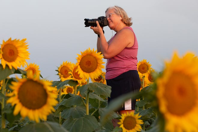 """""""Sunflower season is my favorite time of the year,"""" said Shannon Eddings on Thursday morning at Berry Hill UPick Farm, 5950 S.E. Croco Road in Berryton."""