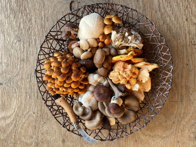 A sampling of mushrooms sold at Shiitake Creek.