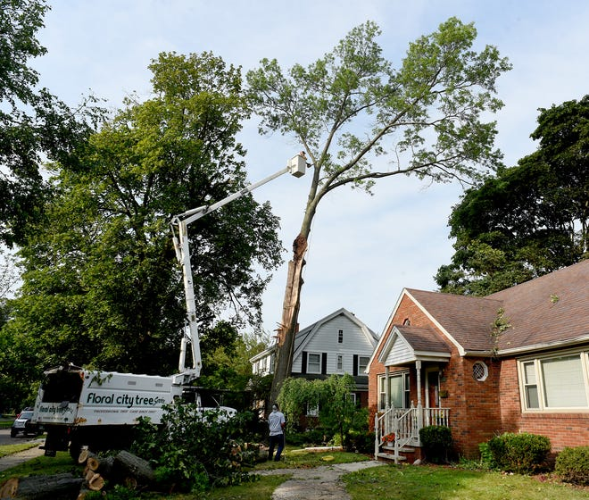 """A crew from Floral City Tree Service begins cutting down a 70-foot oak tree that was damaged by the storm Wednesday outside the home of Tim and Alicia Allen on Hollywood Dr. in Monroe. """"It was a mess out here after the storm,"""" said Alicia Allen. """"Iceberg Heating and Cooling were here working on our furnace when the storm hit, their trucks were hit,"""" said Allen."""