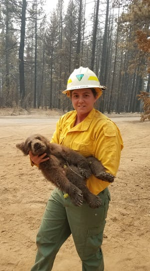 A bear cub was recently rescued from the Antelope Fire.