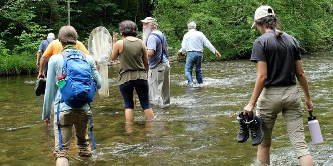 Bioblitz participants ford Abrams Creek to search for biodiversity on the other side (and cool off, too).