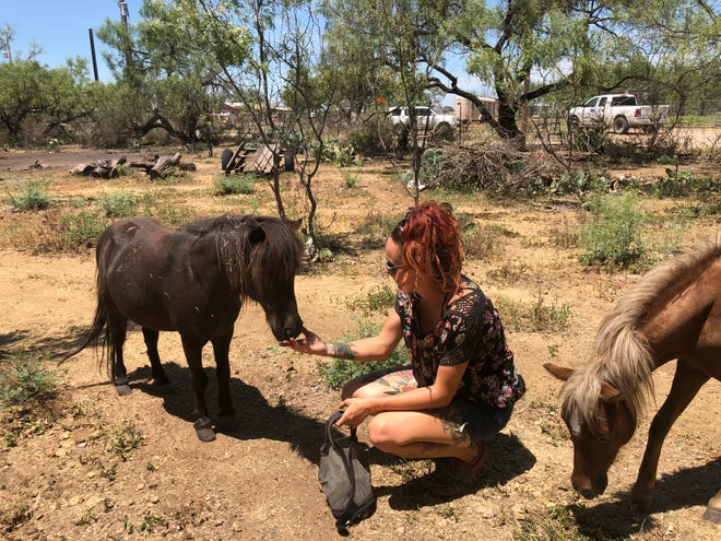 Ashley Stahl with mini horse, Possum.