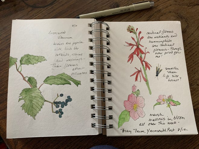 From the author's sketchbook: blooms at Yarmouth Port's Taylor-Bray Farm.