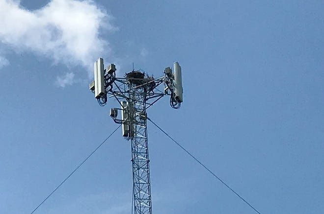 Osprey birds have built a nest at the top of a cellphone tower in Durhamville, adding the beauty of nature to a site that some felt might become a local 'eyesore' when its construction was proposed some five years ago.