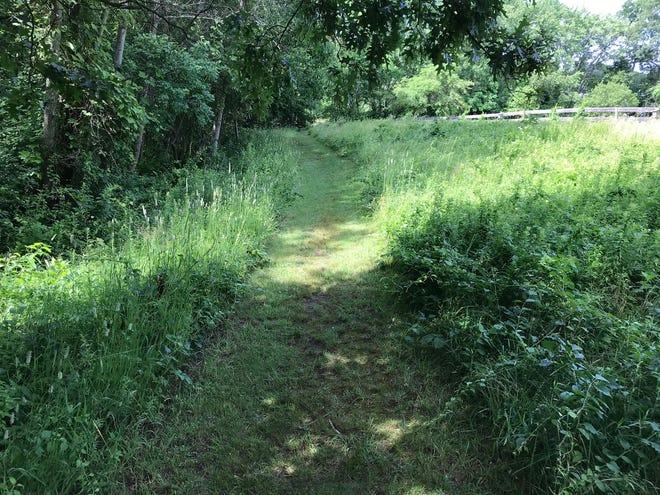 The orange-blazed trail at Powder Mill Ledges starts on a wide, grassy path.