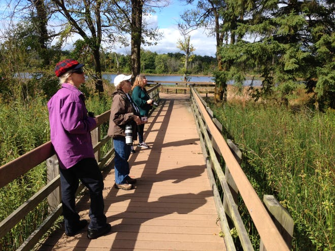 Hikers look for birds on a boardwalk leading to a lake in the Great Marsh in the Indiana Dunes National Park in 2019.