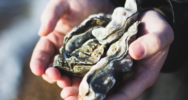 Whole Oyster