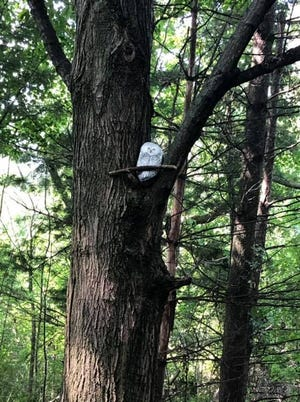 The Sanilac County Historic Village and Museum is missing a stone owl from its nature trail.