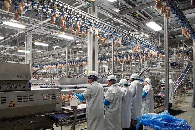 Workers process chickens at the Lincoln Premium Poultry plant, Costco Wholesale's dedicated poultry supplier, in Fremont, Neb.
