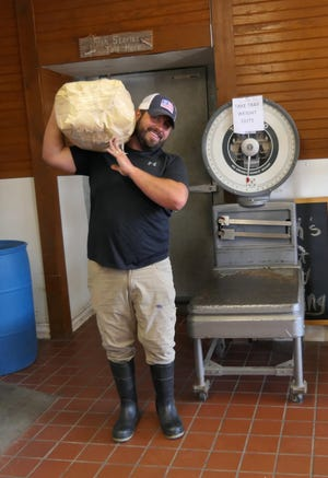 Jordan Champion, the owner of Champs Meats in Halstead, brings half a cow out to a customer.