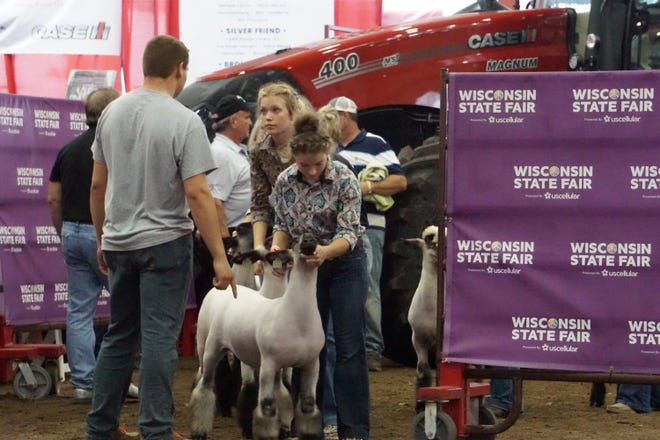 Junior lamb exhibitors wait to enter the ring during the Champion Breed Selection Wednesday, Aug. 11.