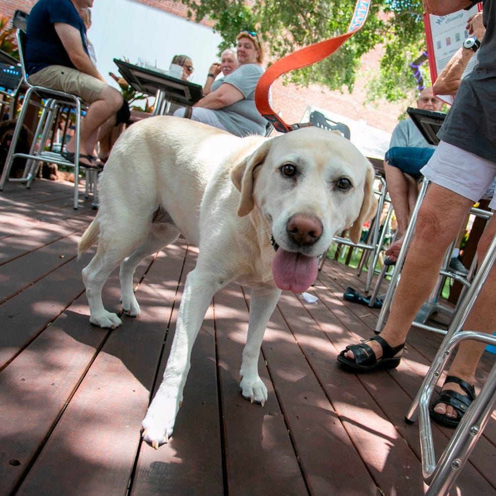 Sarasota-Manatee is home to several dog-friendly restaurants, bars and breweries, such as Motorworks Brewing in Bradenton, pictured here.