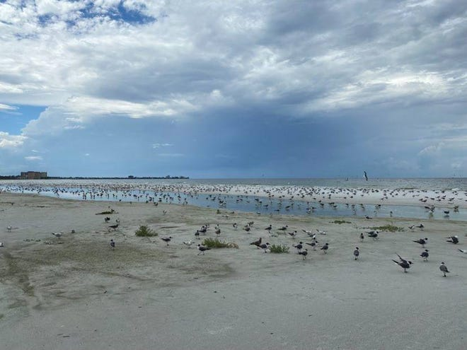 Seabirds gather on Lido Beach during red tide. Water issues are part of the agenda for Sarasota County's 16th annualSustainable Communities Workshop on Nov. 10.