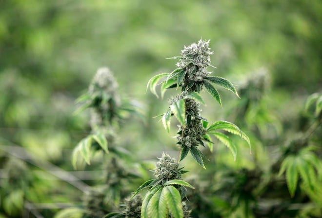 The proposed law would make it legal for adults age 21 and up to grow, buy, and possess marijuana in Ohio.