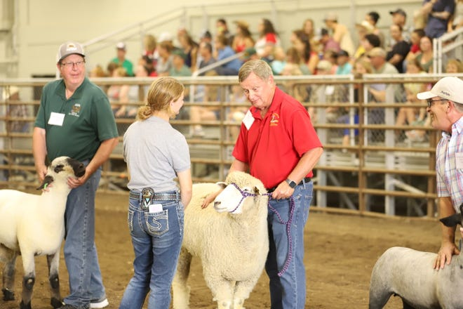 A 4-H member judges state leaders in the sheep competition during the North Dakota Leaders 4-H Showmanship Contest at the North Dakota State Fair in Minot.