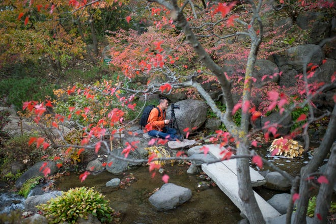 Manny Han of Machesney Park photographs the changing colors of leaves around a large waterfall Wednesday, Oct. 23, 2019, at Anderson Japanese Gardens in Rockford.