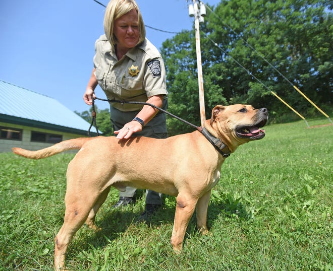 Missy Houghton, Richland County Dog Warden, gives Darren some outside time on Thursday. Darren is a pitbull mix and available for adoption at the Richland County Dog Shelter. He is around three years old and has been a resident at the shelter since December.